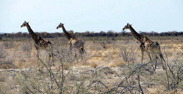 namibia2-14.jpg