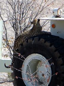 namibia2-19.jpg