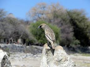 namibia2-23.jpg