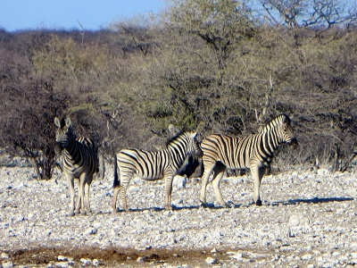 namibia2-4.jpg
