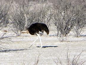 namibia2-5.jpg