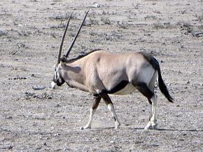 namibia2-6.jpg