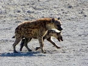namibia2-7.jpg