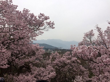 takatoo3.jpg