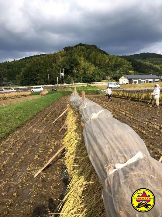 稲刈りH28