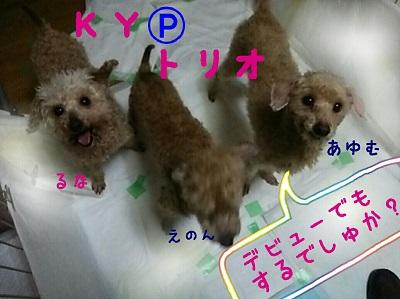 KY0502.jpg