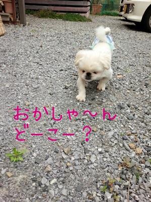 suzu0421.jpg