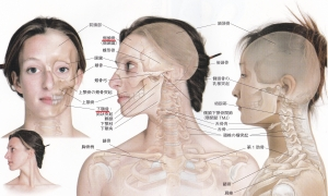 側頭骨と下顎骨