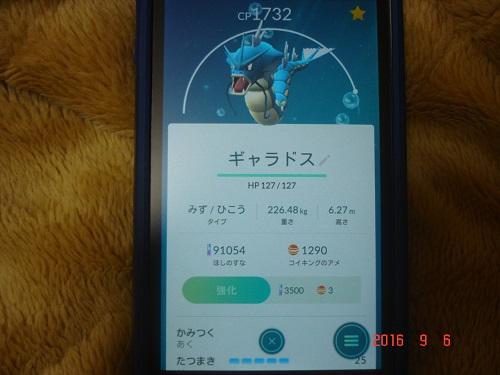 ポケ302