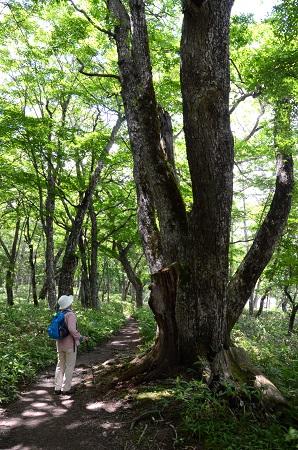 127森の中の大木