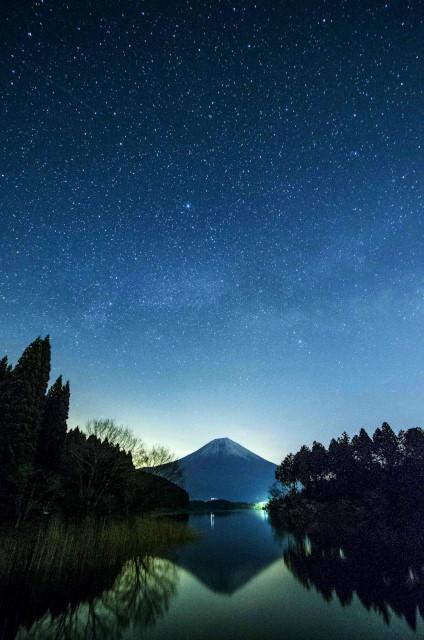 富士桜1_01