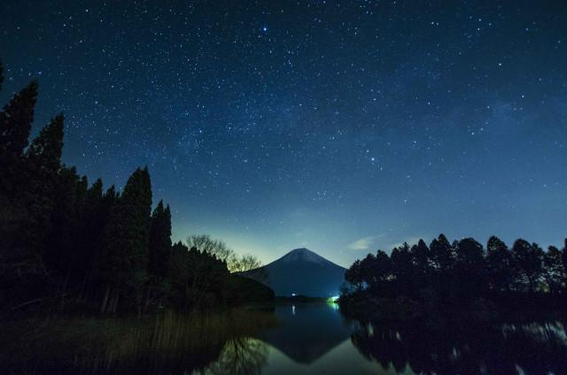 富士桜2_01