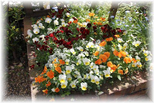 20160423庭の花4