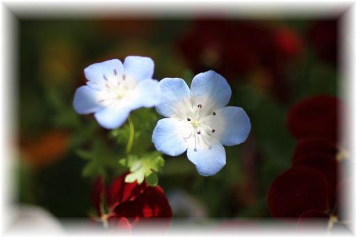 20160423庭の花8