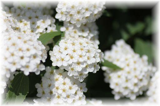 20160423庭の花C