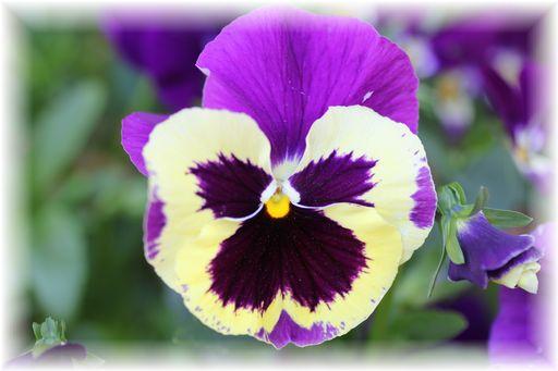 20160423庭の花E