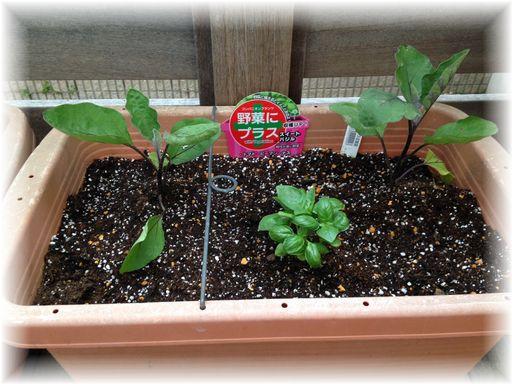 20160507家庭菜園3