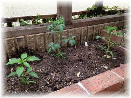 20160507家庭菜園6