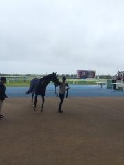 20160717 新馬デビュー勝利のトリオンフくん!おめでとう^^/