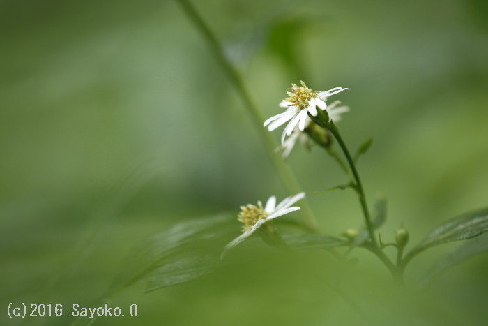 _F4A4692.jpg