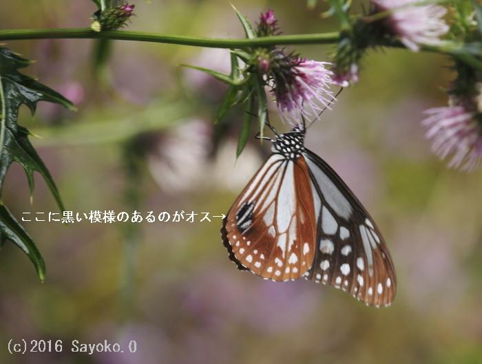 _F4A6053.jpg