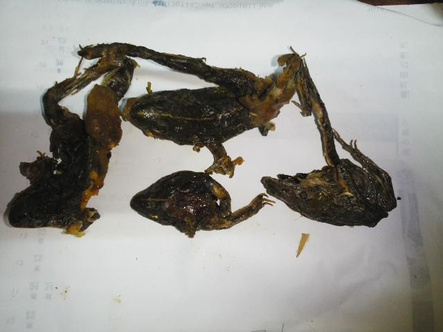 冷凍カエル