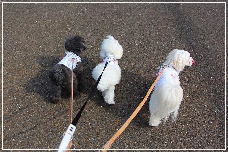 初めての公園、お散歩にシュッパーツ!