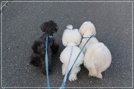 3ぴき仲良くお散歩♪