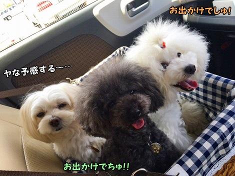 土曜日、3姉妹と一緒に向かった先は~・・・