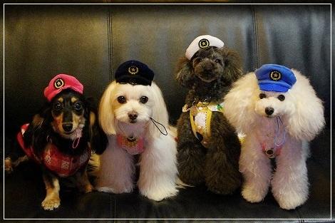 犬のお巡りさん、4ワンVa