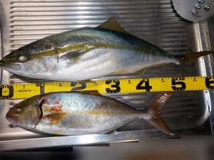 DSCN2371 今日の釣果
