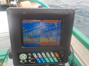 DSCN2390 9時ころ港側でアジ群れ発見