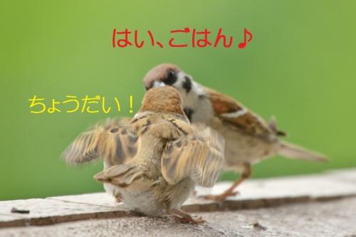 010_201605202046064ab.jpg