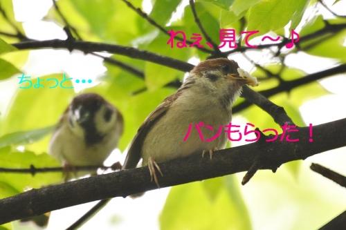 010_20160712194942afa.jpg