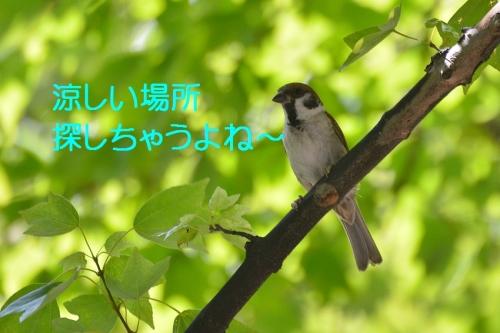 010_2016082618193686c.jpg