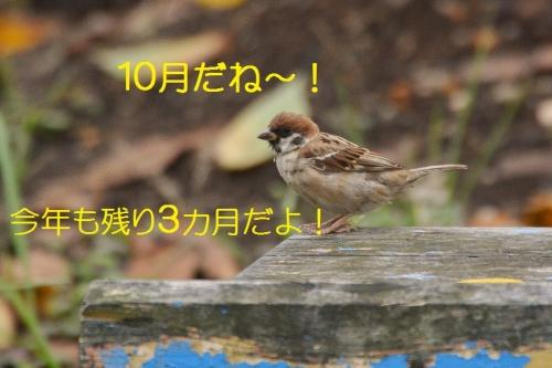 010_20160930192748b1d.jpg