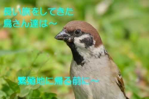 020_2016042619125921c.jpg