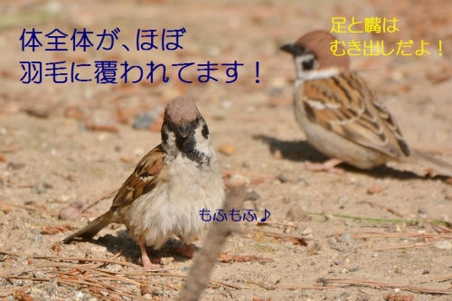 020_20160529004823c7a.jpg