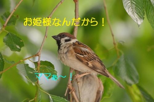 020_20160610200602af1.jpg