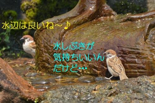 020_2016061120573094e.jpg