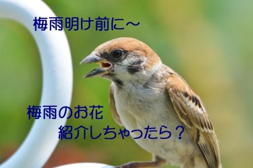 020_20160704205955d86.jpg