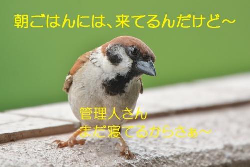 020_201608132236072e7.jpg