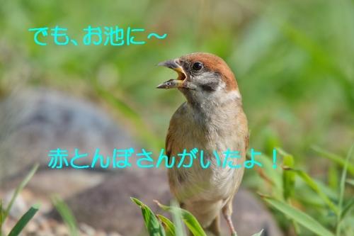020_20160821230950b1d.jpg