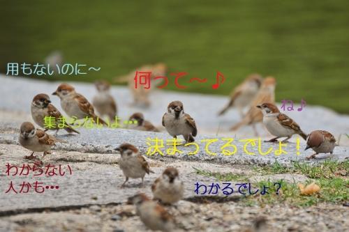 020_20160822184155026.jpg