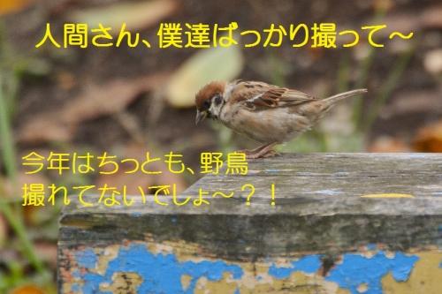 020_201609301927491a1.jpg
