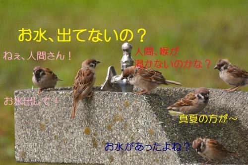 020_20161003191937859.jpg