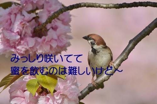 030_20160422193438e8c.jpg