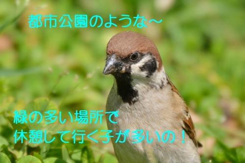 030_2016042619125910a.jpg