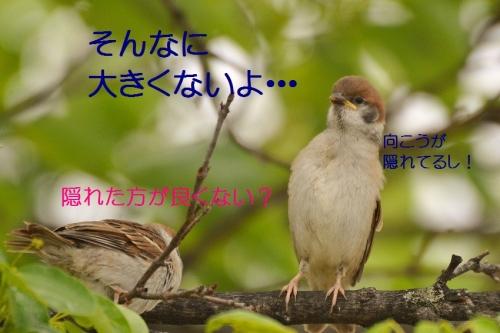 030_2016050820322792a.jpg