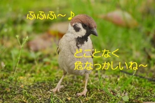 030_2016052121350529a.jpg